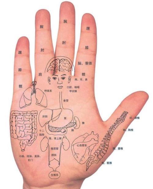 手掌穴位分布_手掌穴位源文件__展板模板